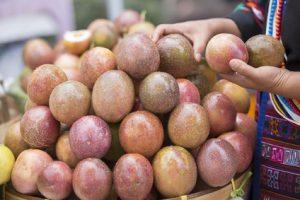 4698dad4afa7 Die beste Zeit für thailändische Früchte - Jurassic Fruit