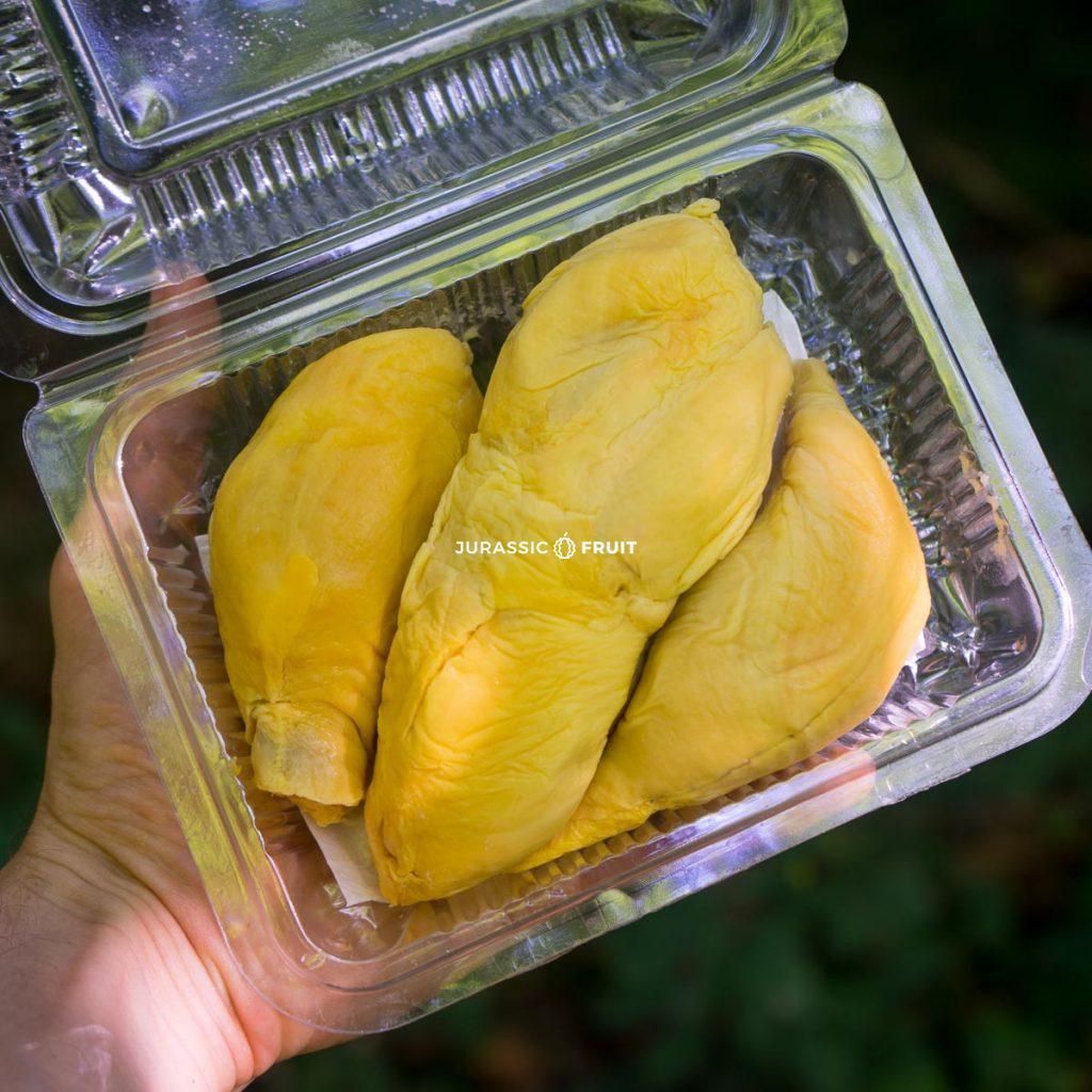Durian Pomanee: eine rustikalere Sorte