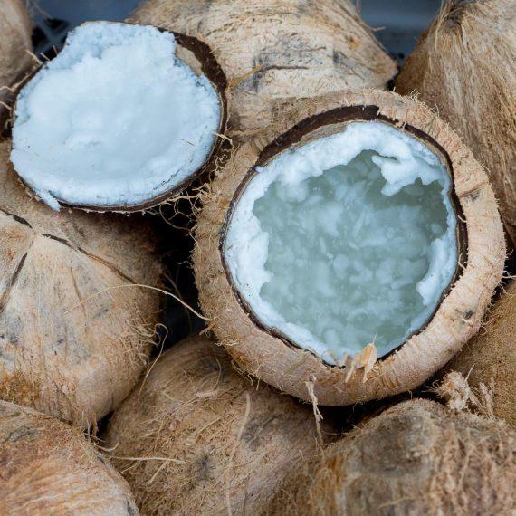 Coco Kopyor - Jurassic Fruit