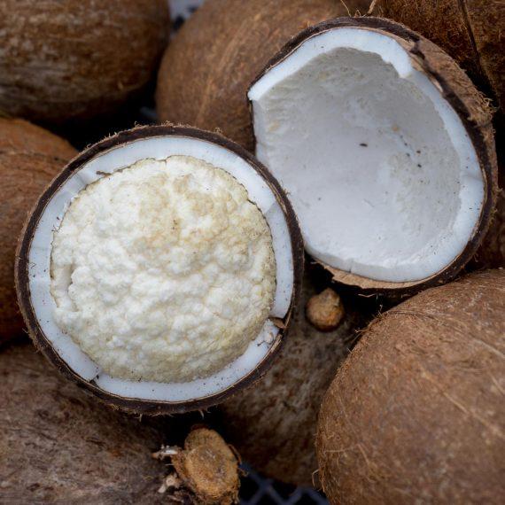 Coco Tombong - Jurassic Fruit
